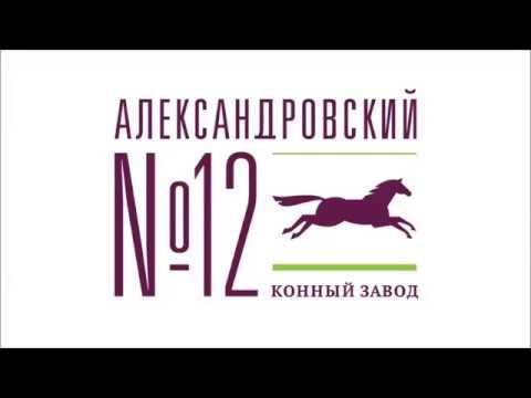 Александровский конный завод / 21.02.2019