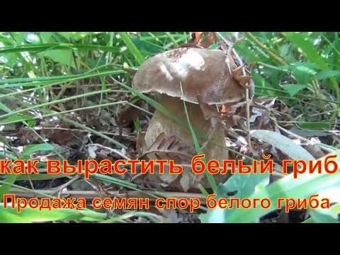 Где в Волгограде купить домашнюю грибницу
