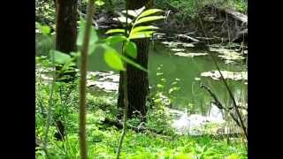 15:06 Natural sounds of midwestern forest, birds, wind and water from Fontenelle Forest NE