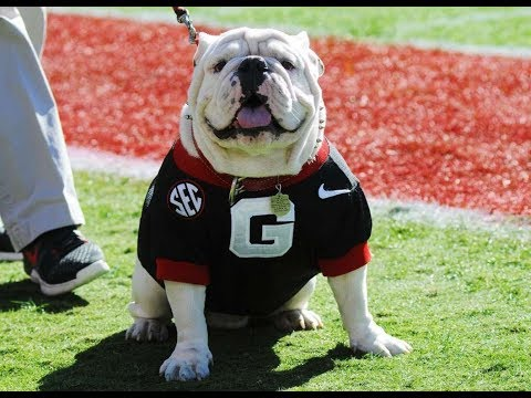 Ranking The 10 Best Mascots In College Football