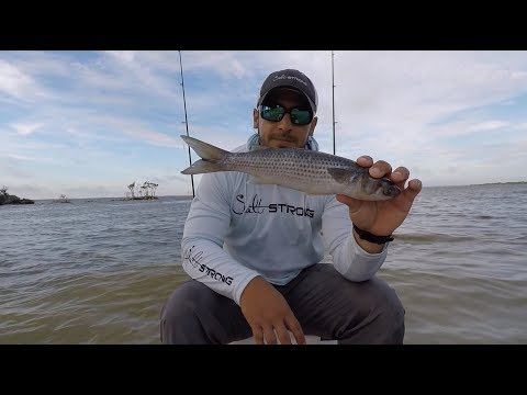 Cut Bait Tips For Catching Redfish
