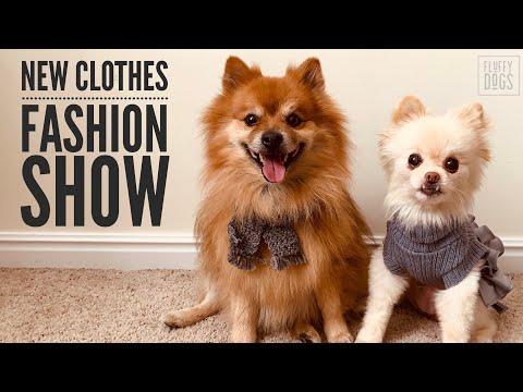 pomeranian-fashion-show-|-mail-monday