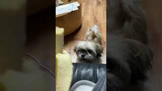 의사표현 확실한 강아지 | 바나나가 먹고싶은 강아지 시…