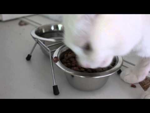 로얄캔 이코노미 (참치&치킨) 60g 2