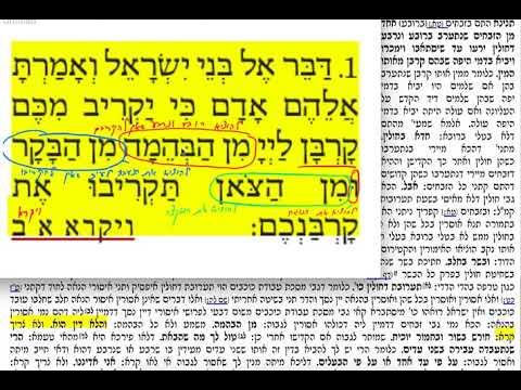 הדף היומי מסכת תמורה דף כח Daf yomi Temurah daf 28