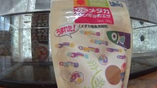 暑い季節が来ましたね、ます太郎は早くも夏バテ気味です。 めだかを観て...