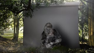 Koko the gorilla is the voice of Nature at COP21