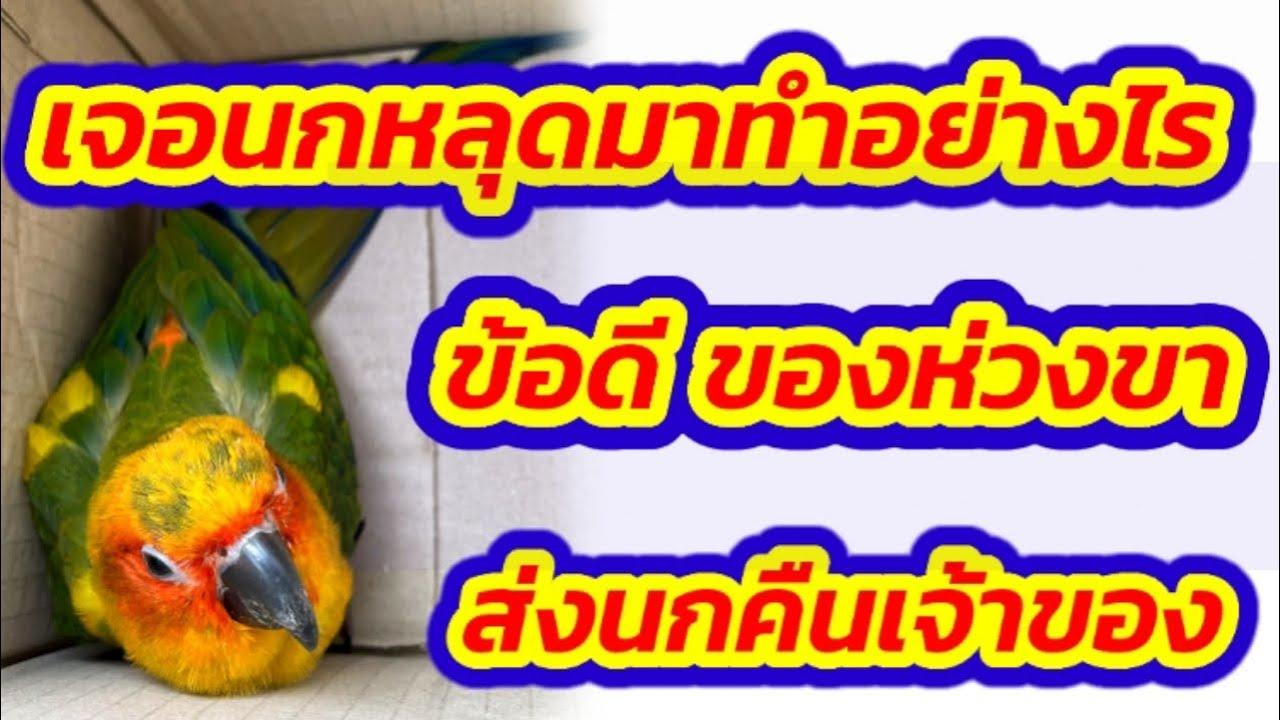 #เจอนกหลุด #ส่งนกคืนเจ้าของ #วิธีป้องกันนกหลุด