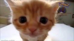 Katzenvideo -  Süße Katzen