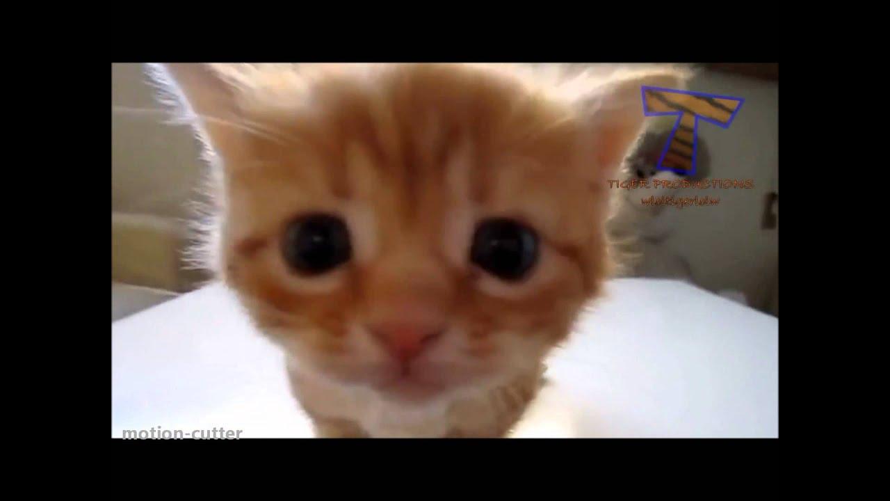 Katzenvideos FГјr Katzen