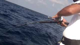 Rock fighting huge monster fish jigging