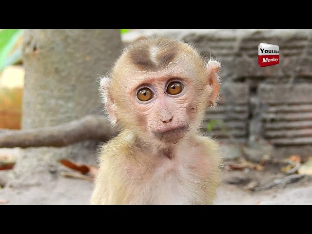 Heart Breaking! Youll cry with Axel Poorest baby monkey/cute baby baby why living lonely