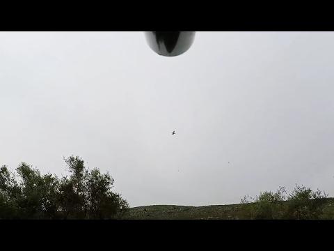 hunting song thrush turdus tordo in Lebanon 2 (gopro beretta)