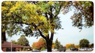 Жизнь в США: 8 Миля, Детройт и Красота Осень в Америке | VLOG November 7th, 2014