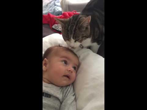 Cute cat licking baby's head