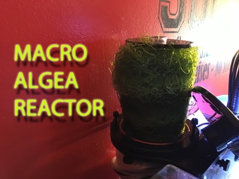 10 Gallon Nano Reef Tank   Algae Reactor   Kessil A80