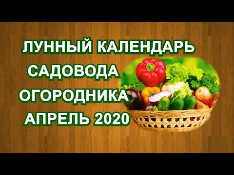 ЛУННЫЙ КАЛЕНДАРЬ САДОВОДА и ОГОРОДНИКА на АПРЕЛЬ 2020 года. | садовода_2020 | огородника | огородник | календарь | посевной | садовод | посевы | лунный | сеять | когда