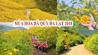 Hoa Dã Quỳ đang phủ vàng khắp các cung đường Đà Lạt 2018