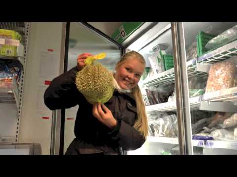 Durian in Oslo Norway? Durianhunting around the streets of Oslo.