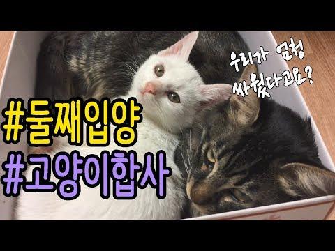 고양이 합사, 둘째 들이기 성공!    /     19층냥꼬네