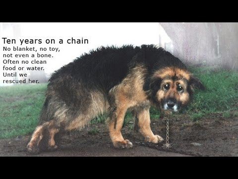 10 Years Chained: A Dog's Rescue Story. She was snowed and sleeted on - covered in mud - no comforts