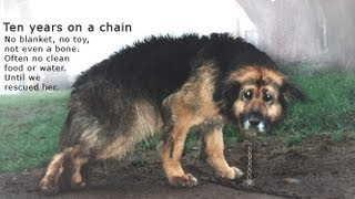 Repeat youtube video 10 Years Chained: A Dog's Rescue Story. She was snowed and sleeted on - covered in mud - no comforts