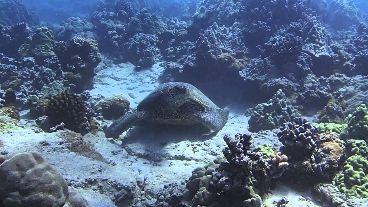 Snorkeling Ahihi Kinau Natural Area Reserve Makena Maui Hawaii Youtube