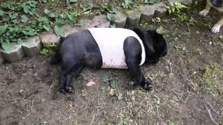 ブリちゃんが寝ている姿を見て飼い主たちがひどいことを言っているとい...