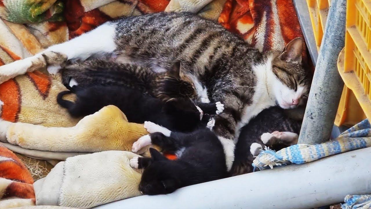 고양이 가족과 친구가 되는 과정 The process of making friends with the cat family