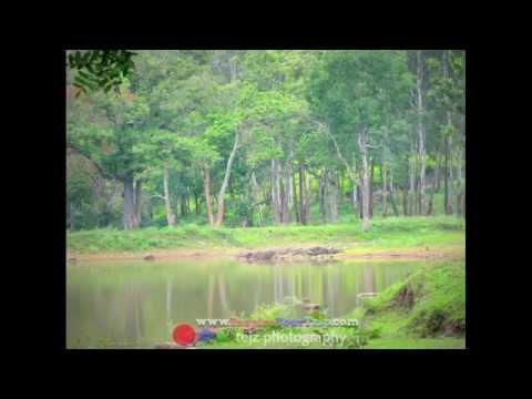 Kgudi Wilderness Camp Jungle Resort
