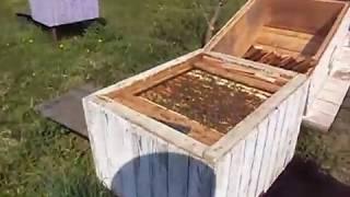 Апрельский рой .Первый  Рой  Пчел . Весеннее роение .