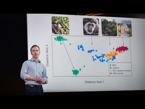 How we study the microbes living in your gut | Dan Knights