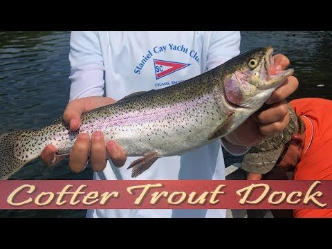 Arkansas White River Trout Fishing Report August 21, 2019