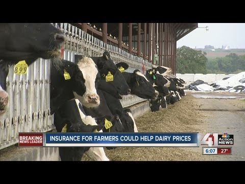 Insurance for farmers could help dairy prices