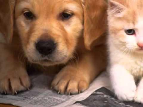 chó và mèo song ca !