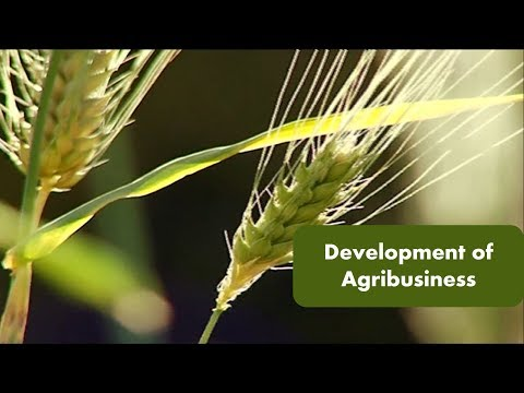 Development Of Agribusiness
