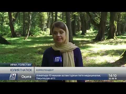 Объем лесных ресурсов