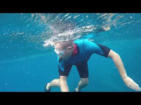 Kermadec snorkel with Galapagos Sharks