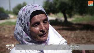 بالفيديو.. فلسطينيات ينافسن الرجال في تربية النحل