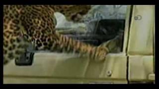 Moments of Impact: Big Cat Attack