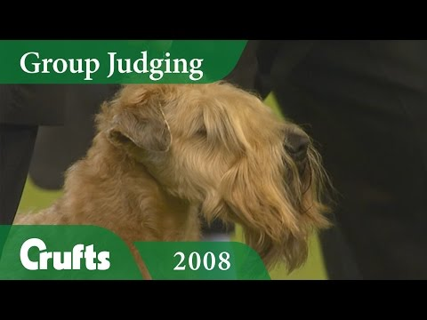 Soft Coated Wheaten Terrier wins Terrier Group Judging at Crufts 2008 | Crufts Dog Show