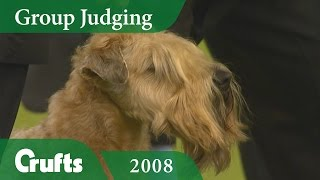 Soft Coated Wheaten Terrier wins Terrier Group Judging at Crufts 2008   Crufts Dog Show