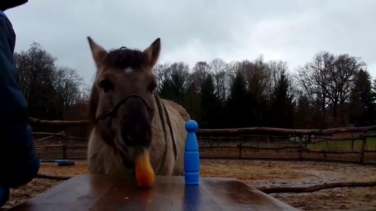 Geburtstagsgrusse Pferd Die Liebsten Geburtstagsspruche Fur