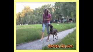 Старшая школа - что учит собака?