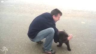 Viral Video Shows Baby Bear Trying To Get Some Love