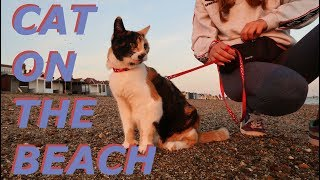 Taking my cat for a walk! | Lucy Lynch
