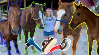 GROOMING ALL MY HORSES in ONE Video! | How To Groom A Horse