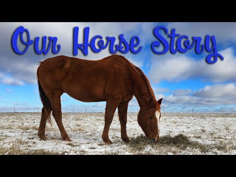 Our Horse Story... so far!