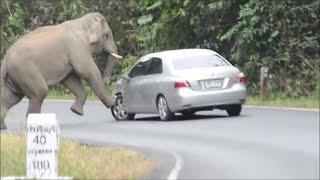Crazy elephant فيل مجنون