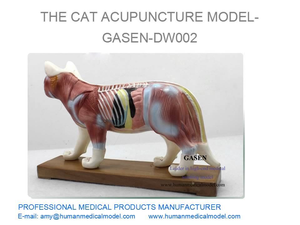 HIGH-END MEDICAL PRODUCTS ANIMAL ANATOMY MODELS THE CAT ACUPUNCTURE MODEL GASEN DW002